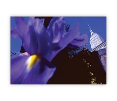 New Yorker Blumengruß Klappkarte mit Lilien - http://www.1agrusskarten.de/shop/new-yorker-blumengrus-klappkarte-mit-lilien/    00011_0_489, Blume, Blumen, Blumengruß, Grußkarte, Klappkarte, Lilie, New York, Stadtansicht00011_0_489, Blume, Blumen, Blumengruß, Grußkarte, Klappkarte, Lilie, New York, Stadtansicht