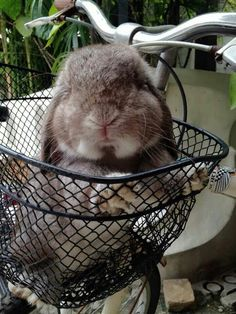 Bun basket bike ride #cyclingpets #cyclinganimals #cycling