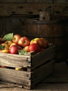 SEASONAL – AUTUMN – the fall is a good time to harvest apples in new england.