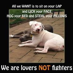 pure true honest ..My daughter and son-in-law had  a white pitt bull.He was so  gentle!!!!!