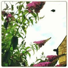 Butterfly mid flight