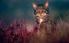 Wallpaper kucing hutan