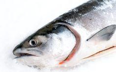 140304-saumon-frais.jpg 700×438 pixels