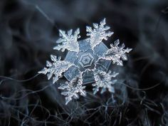 macro snowflake photo  http://www.treehugger.com/natural-sciences/macro-photos-snowflakes-show-impossibly-perfect-designs.html