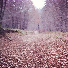 Y hojas secas, secas,... Se cayó