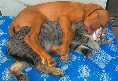 proof that cats and dogs get along just fine