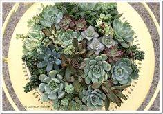 Succulent Tabletop