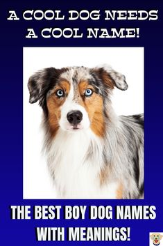 dog names boy A Cool Aussie dog deserves a puppy name from the male dog names list. Find the perfect dog name from the best list of boy puppy names. Good Boy Dog Names, Male Dog Names List, Cute Puppy Names, Cute Names For Dogs, Cute Puppies, Dogs And Puppies, Funny Dog Names Male, Unique Dog Names Boy, Top Dog Names