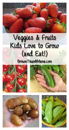 and Fruits Kids Love to Grow (and Eat!) These veggies and fruits are easy to grow and your kids will love to eat 'em--probably right off the plant!These veggies and fruits are easy to grow and your kids will love to eat 'em--probably right off the plant! Fruit Garden, Edible Garden, Growing Vegetables, Fruits And Vegetables, Growing Tomatoes, Organic Gardening, Gardening Tips, Vegetable Gardening, Gardening Books