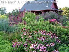 Hayefield.com: Summer border with Echinacea purpurea, Helianthus 'Lemon Queen' (just coming into bloom), Sorghastrum nutans 'Indian Steel', Knock Out rose, and Vernonia gigantea