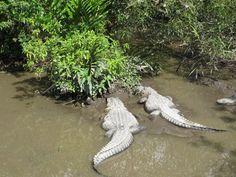 Day #7 - More friends @Everglades Safari Park