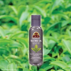 OKAY tea tree oil Will help unblock the hair follicles, thus eliminating dandruff. Usage with Tea Tree Oil helps to eliminate and rid the hair from lice and eggs. Tea Tree Oil's antifungal properties will fight against and eliminate fungus.Tea Tree Oil will balance oily and dry skin eliminating acne. You can find this product on OkayPureNaturals.com #okay #okaypurenaturals #tea #tree #oil #hair #skin #haircare #skincare #antifungal #balance #eliminate #acne