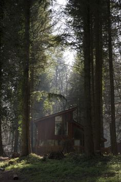 gnostic-forest: I cannot even describe in words how happy I'd be here