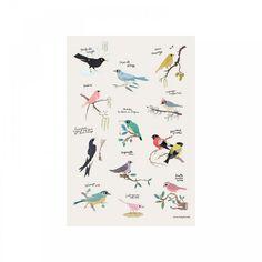 poster-oiseaux-tinou-le-joly-senoville