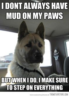 I don't always have mud on my paws...but when I do, I make sure to step on everything