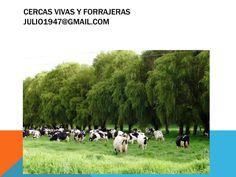 cercas-vivas-y-forrajeras-para-ganados by julioestrada via Slideshare
