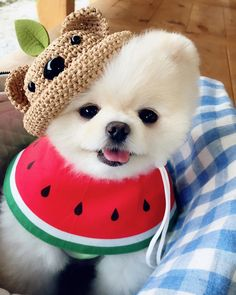 Cute Baby Animals, Animals And Pets, Funny Animals, Cute Dogs Breeds, Dog Breeds, Teacup Puppies, Cute Puppies, Pierre Brice, Pomes