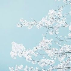 Read pastel blue from the story A E S T H E T I C S by Midnight_Ramblings with 441 reads. The colour of the sky the day i fell in love with. Light Blue Aesthetic, Blue Aesthetic Pastel, Aesthetic Colors, Aesthetic Pictures, Wallpaper Color, Hawke Dragon Age, Ronin Samurai, The Garden Of Words, Everything Is Blue