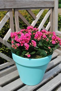 Beautiful painted terracotta pot with Kalanchoe plant