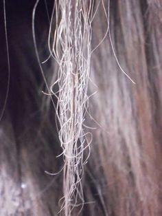 Livre-se dos cabelos quebrados e quebradiços com nossos tratamentos, vale à pena checar. #quebrados #quebradiços #ressecados http://salaovirtual.org/como-tratar-cabelos-quebrados/