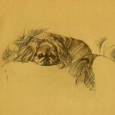 Lucy Dawson Dog Portraits Pekingese Nanki Poo