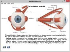 American Board of Opticianry - Register for Upcoming Basic ...