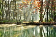 My River by gérald chapert on 500px. #Provence #Sorgue #Vaucluse #atmosphere #autumn #backlight #bench #colors #landscape #light #mist #river #shadows #sunrise #tees #water #zen #énergy