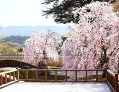 実相院 春の庭