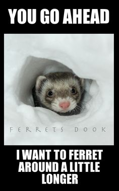 Ferret in Snow Tunnel
