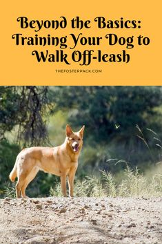 Useful Dog Obedience Training Tips – Dog Training Basic Dog Training, Training Your Puppy, Off Leash Dog Training, Training Dogs, Training Collar, Dog Minding, Dog Whisperer, Easiest Dogs To Train, Pet Dogs