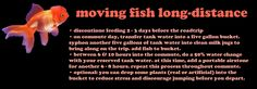 moving long-distance with fish