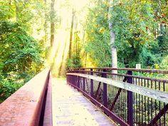 Walking at Shaffner Park, Winston Salem, NC.