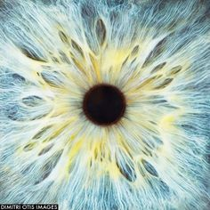 Draw Human Eyes Blue eye, close-up of iris and pupil Close Up Art, Eye Close Up, Extreme Close Up, Texture Photography, Close Up Photography, Pretty Eyes, Beautiful Eyes, Eye Texture, Iris Art