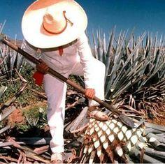 Méxican jimador Style. Huaraches tejidos, color crudo.  Guadalajara.