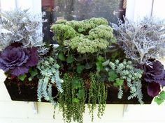 I like unique look of this. You could exchange the autumn joy sedum in the…