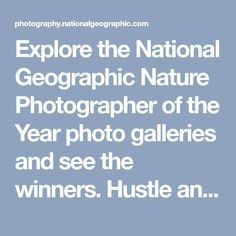 Explore the National Geographic Nature Photographer of the Year photo galleries and see the winners. Hustle and Flow. View All - Week 4 galleries.