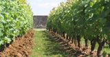 What is our philosophy? : Vins Vouvray, Vente en ligne Vins Vouvray, Chenin, Pineau de loire - Domaine Champalou