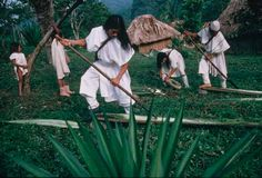 """Clad in traditional white tunics, Arhuaco men in the village of Bunkwimake scrape fiber from the leaves of agave cactus. Women spin the fiber into thread and weave it into bags. The men weave the thread into stiff white hats. Sierra Nevada, White Hats, Appropriate Technology, Man Weave, Tribal People, White Tunic, Lost City, Traditional Outfits, South America"