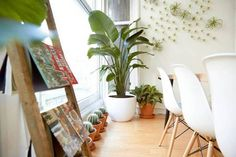 A Houseplant Haven: The Sill x Breather - The Oasis space, NYC