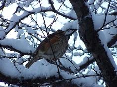 bird in the tree | Flickr - Photo Sharing!