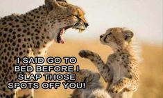 Memes mom animal pictures 18 ideas #memes