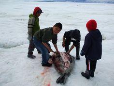 Boys cutting up seal, photo by Raygee Palituq