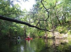 1000 images about sopchoppy florida on pinterest worms florida and