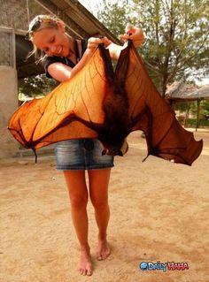 Megabat (aka giant fruit bat or flying fox)