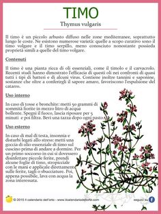 Il Calendario dell'Orto Aromatic Herbs, Medicinal Herbs, Natural Life, Natural Health, Healthy Tips, How To Stay Healthy, Healthy Food, Wicca Recipes, Vegan Lifestyle