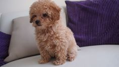 Looks like a teddy bear!!!!