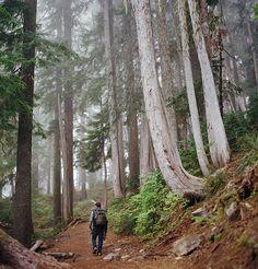 Mt. Rainier | National Park