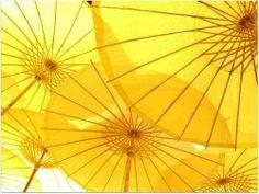 Yellow parasoles.