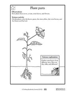 3rd grade, 4th grade Science Worksheets: Attract or repel