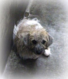 **WILL DIE THURS. 08/07/14 7pm**  ODESSA SUPER URGENT~~Terrier female ~1-2 year old ~ Kennel A21 ~ Available NOW ****$51 to adopt  Been in the back since the 7th. URGENT!!! Must get out.   Located at Odessa, Texas Animal Control. Must have a valid Drivers License and utility bill with matching address to adopt. They accept Credit Cards, cash or checks. Please send us a PM if we can answer any questions for you.